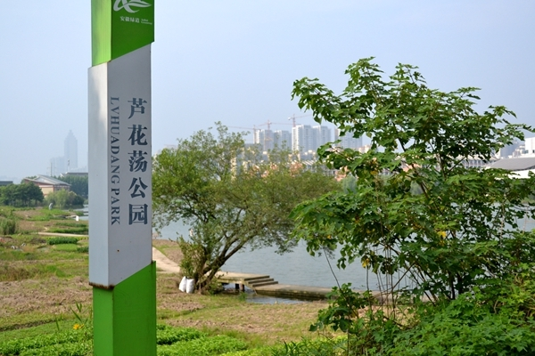 翰林公馆西边芦花荡湿地公园