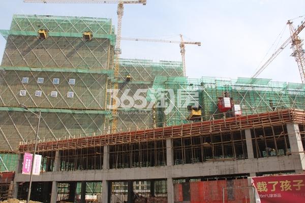 红豆香江豪庭实景图