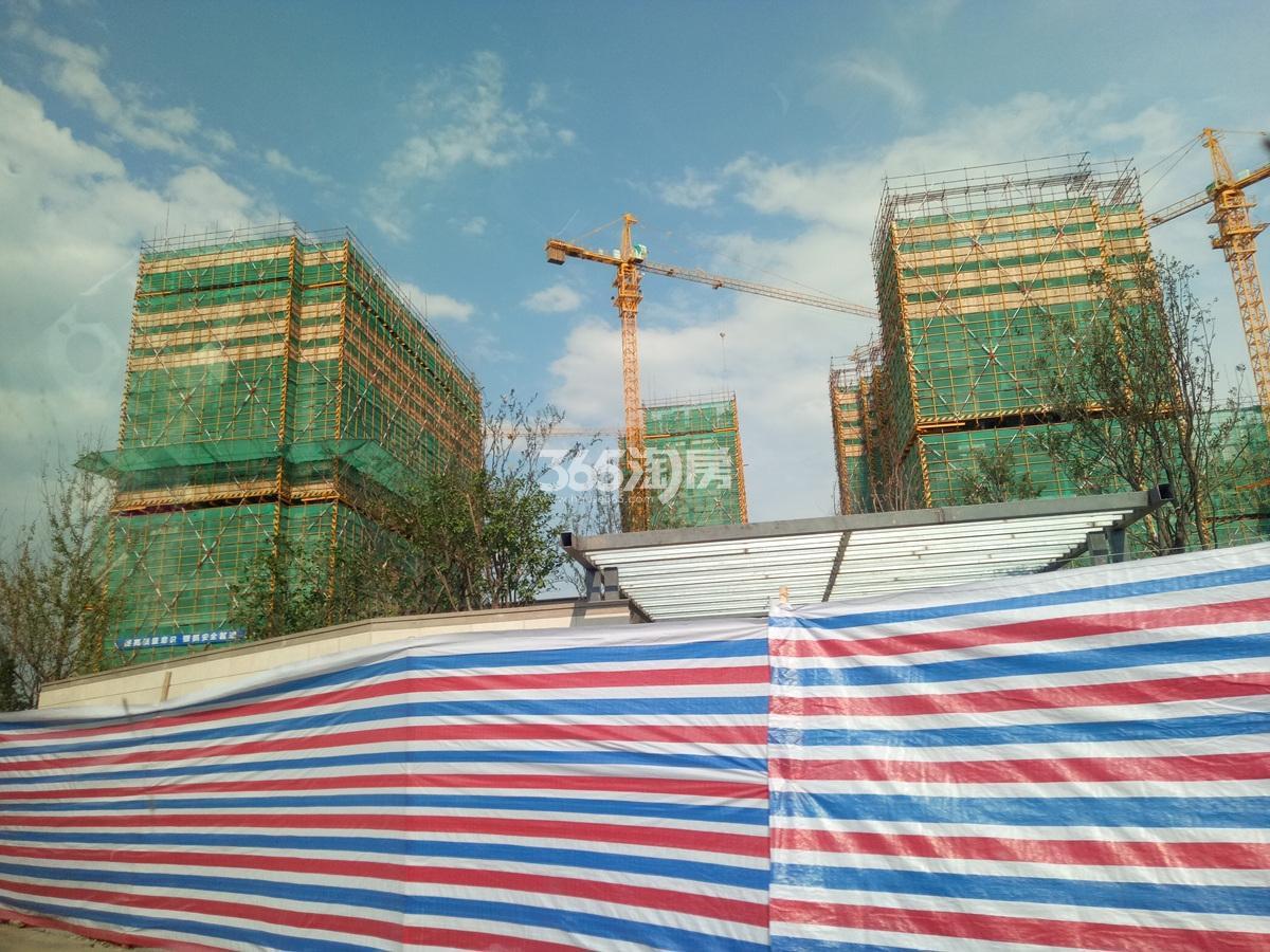 2017年8月底招商远洋春秋华庭局部楼栋实景图